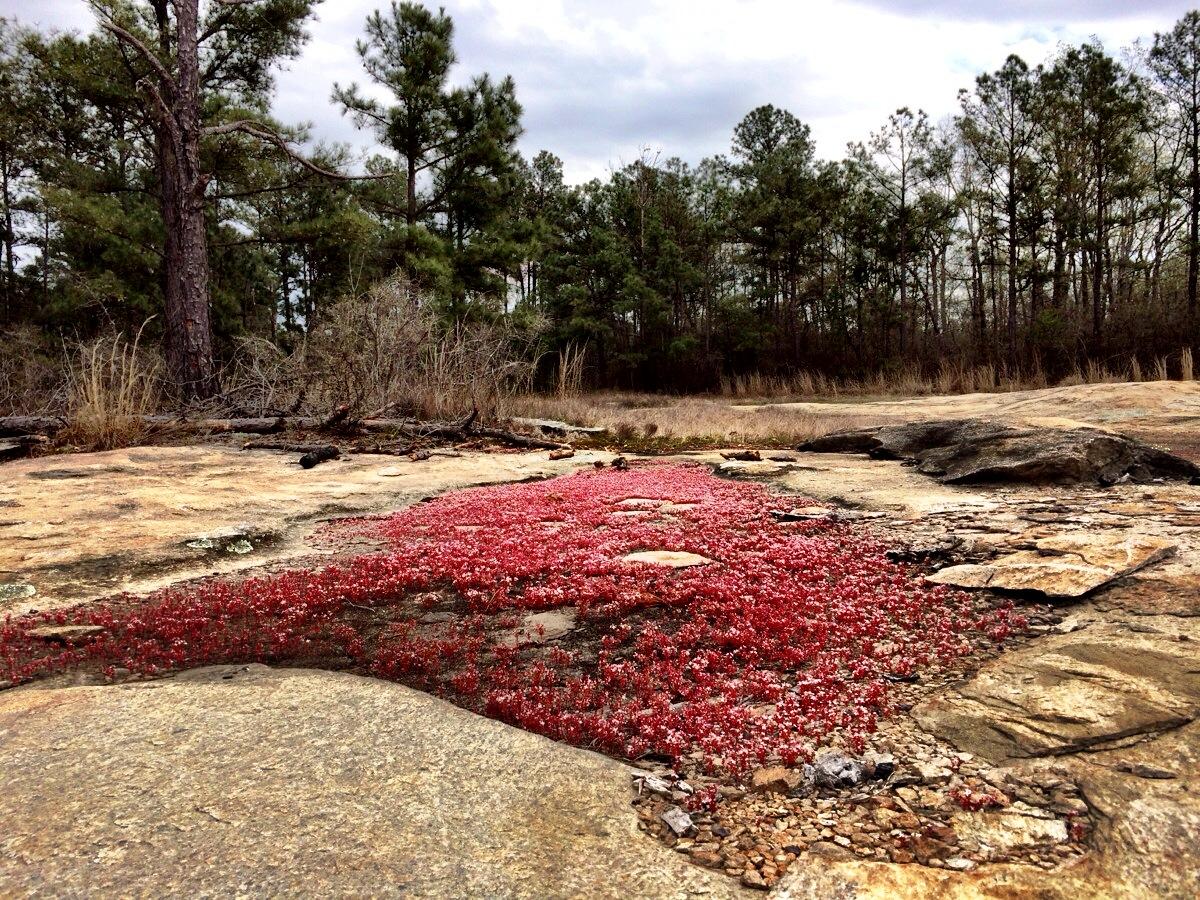 10  chattahoochee bend state park secrets revealed