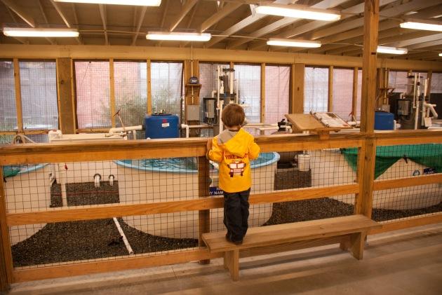 Georgia Sea Turtle Center - vacation ideas for Atlanta families