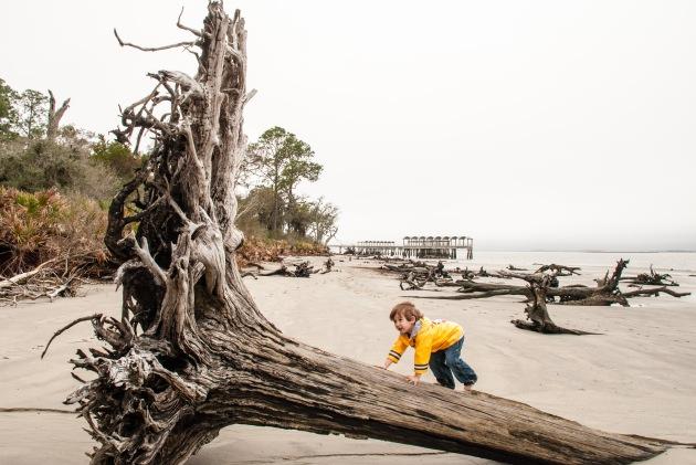 Driftwood Beach - vacation ideas for Atlanta families
