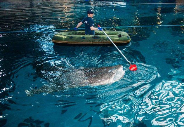 Behind the Scenes at Georgia Aquarium - ideas from 365 Atlanta Family