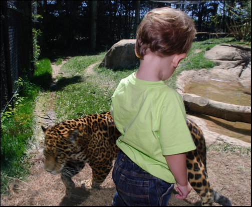 Chattanooga Zoo - ideas for Summer Vacation