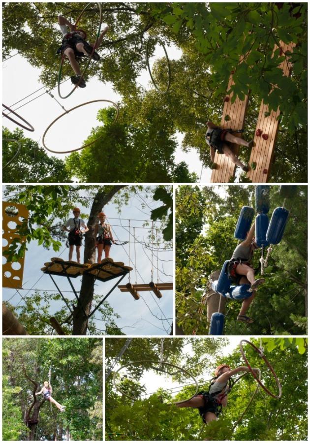 Asheville-Treetops-2