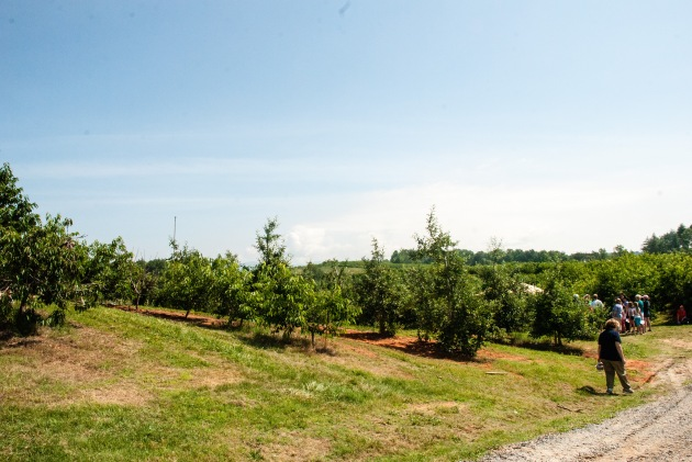 Mercier Orchards - Blue Ridge Mountains