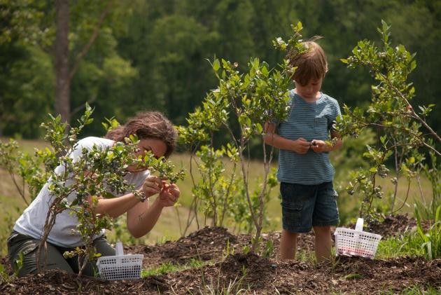 Mercier Orchards - Blue Ridge Mountains